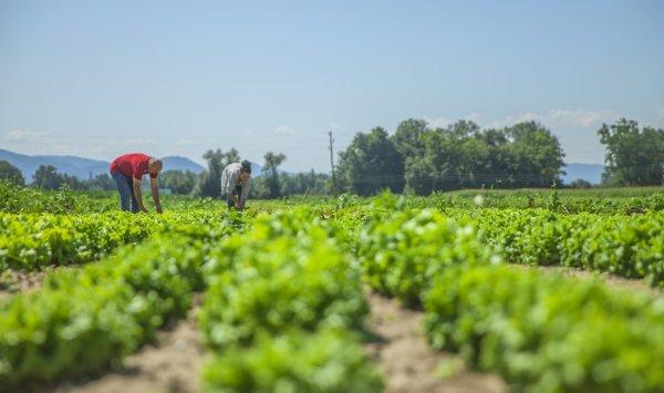 Tarım ve Hayvancılık Sektörü BURTARIM'da Buluşacak