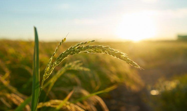 Tarım ÜFE Yıllık Yüzde 23,35 Arttı